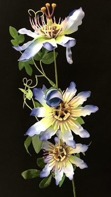 Passionflower, sininen/vihreä