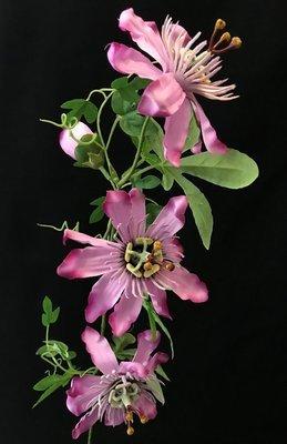 Passionflower, vaaleanpunainen