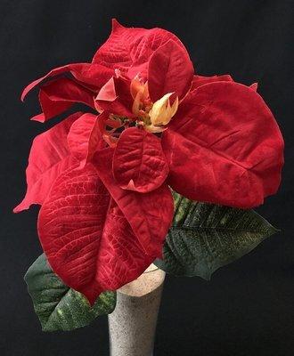 Joulutähti, punainen