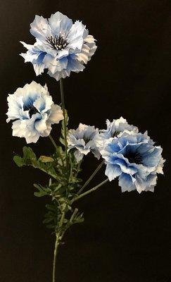 Ruiskaunokki, vaalean sininen