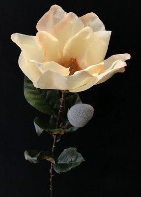 Magnolia, kerma