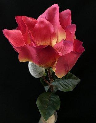 Magnolia, pinkki