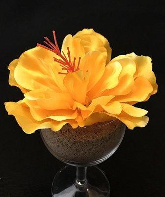 Hibiskus-kukkapää, keltainen