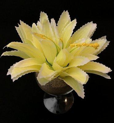 Agave-kukkapää, keltainen