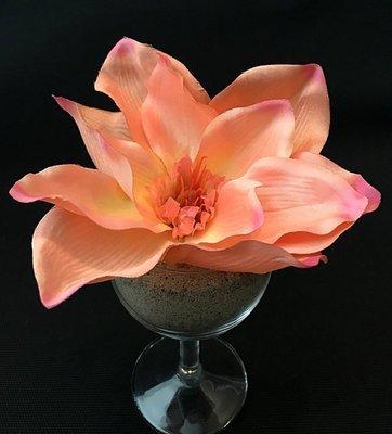 Magnolia-kukkapää, persikka