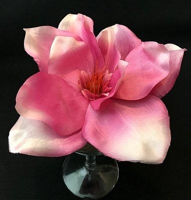 Magnolia-kukkapää, fuksia