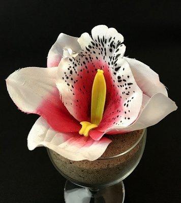 Orkidea-kukkapää, punainen+valkoinen reuna