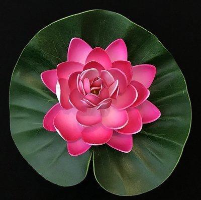 Lumpeenkukka-kukkapää, pinkki