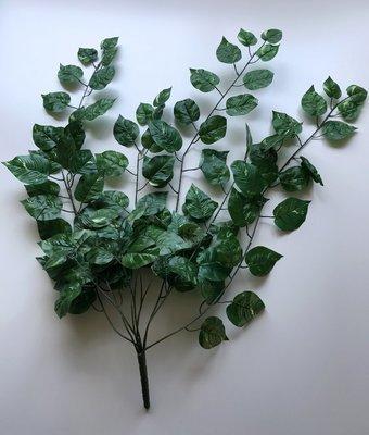 Tekokultaköynnös amppelikasvi, vihreä