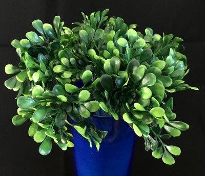 Varpukasvin teko-oksa, vihreä