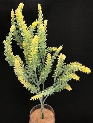 Kanerva teko-oksa, keltaiset kukat