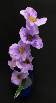 Orvokki, laventeli