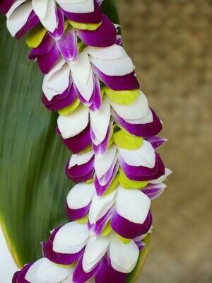 TRI COLOR FEATHER LEI (WHITE + GREEN + PURPLE)