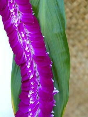 PURPLE FEATHER LEI (ORCHID)
