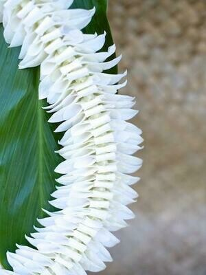 WHITE ALANA LEI (ORCHID)