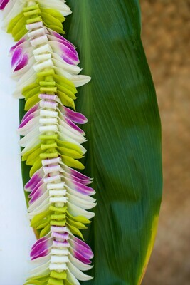 TRI COLOR BUTTERFLY LEI (WHITE + GREEN + PURPLE)