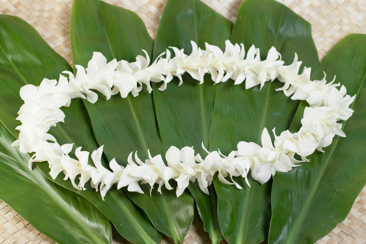 WHITE ORCHID LEI MULTI-PACK