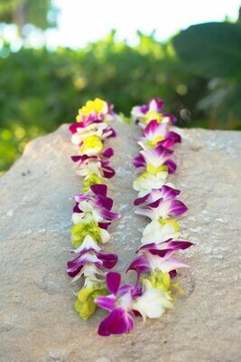 TRI COLOR ORCHID LEI MULTI-PACK