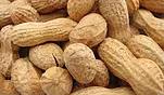 In Shell Peanuts
