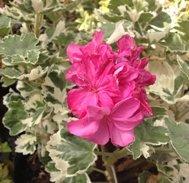 York Florist