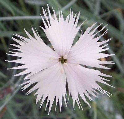 Plumarus (age unknown)