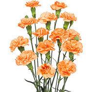 Orange Amelie