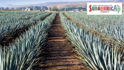 Mexico, Tequila Express
