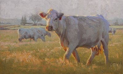 Charolais - limited edition
