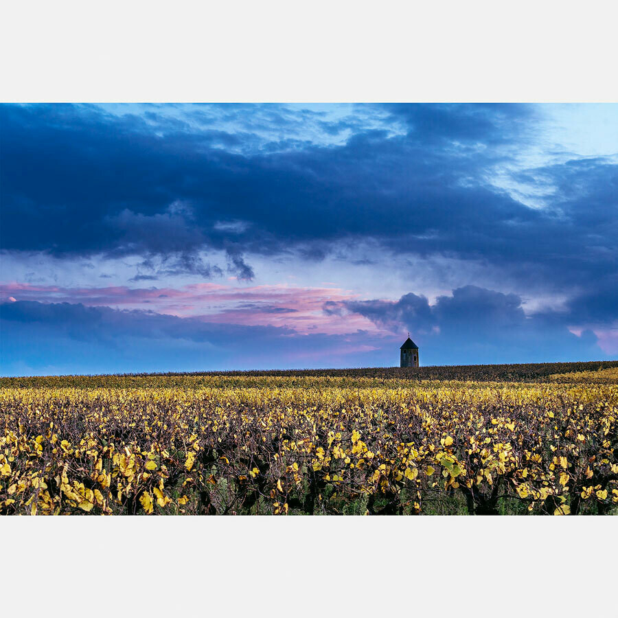 Vignes en automne - France