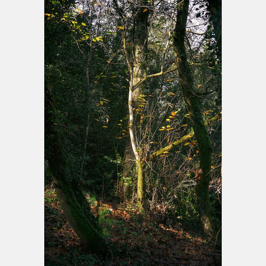 Mise en lumière - Couleurs d'automne - France