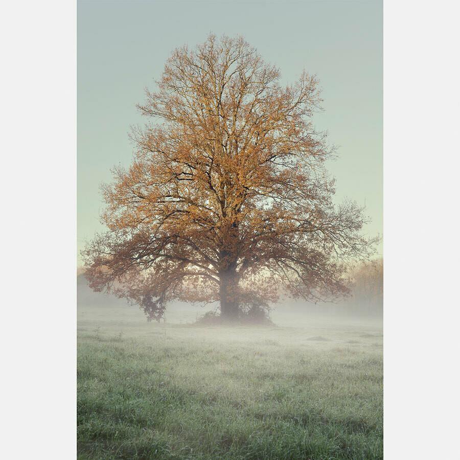 Lumière du matin en automne - France