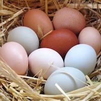 Farm Fresh Eggs (6) GMO-free | Heritage Chicken Eggs | Heritage Turkey Eggs