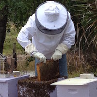 One-on-One Private Beekeeping Lesson