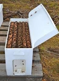 Honey Bees for sale | 5-frame NUC | August 2020 Waiting List