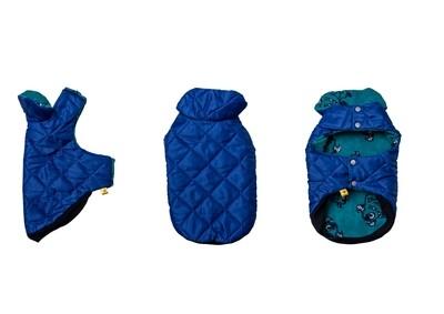 Blue Coat - Miniature Dachshund - 2
