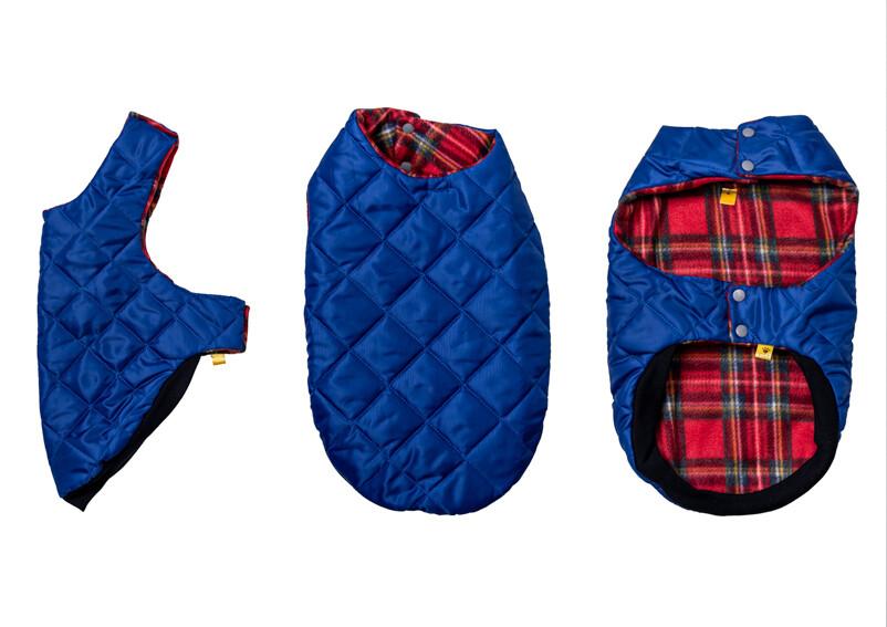 Blue Coat - Miniature Dachshund - No Collar