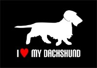 Car Sticker- Wire Haired Dachshund