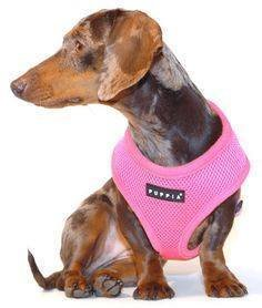 PUPPIA Harnesses - Multiple Colours Medium