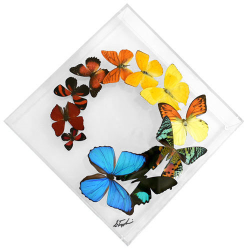 "14 - 10"" X 10"" Diamond Butterfly Display Swirl"