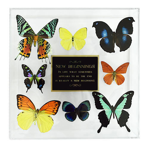 "15 - 10"" X 10"" Plaque Butterfly Display"