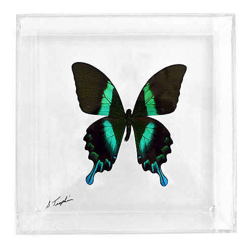 """07 - 7"""" X 7"""" Square or Diamond Display With Premium Butterfly"""