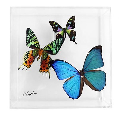 """08 - 7"""" X 7"""" Square Display With Three Butterflies"""