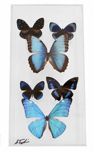 """11 - 6"""" X 12"""" Butterfly Display Museum Mount"""