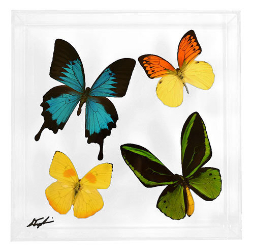 """12 - 10"""" x 10"""" Butterfly Display With Four Butterflies"""
