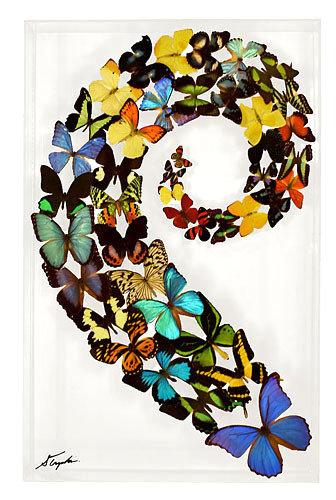"25 - 18"" X 28"" Butterfly Display Swirl"