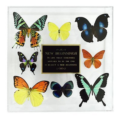 """15 - 10"""" X 10"""" Plaque Butterfly Display"""