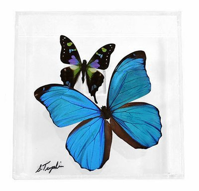 """04 - 6"""" X 6"""" Square Display With Two Butterflies"""