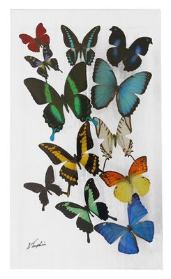 """17 - 10"""" X 17"""" Butterfly Display"""