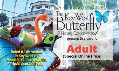 Admission - Adult