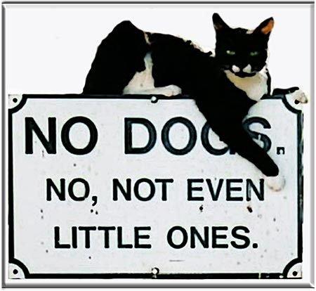 NO DOGS * 8'' x 8'' 10536